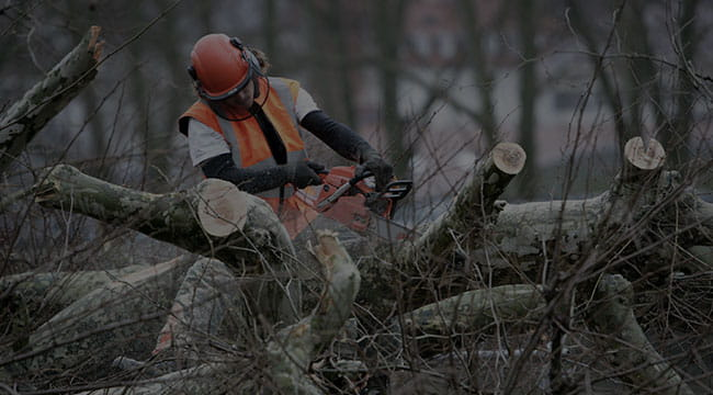 Paris Tree Service